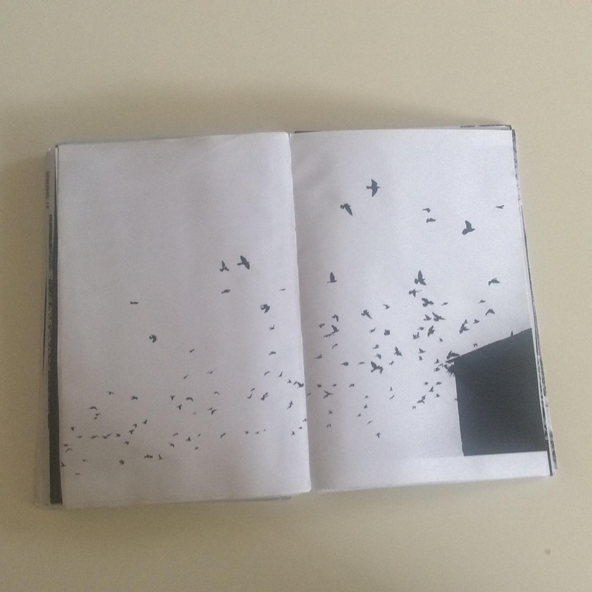 Photographies Sabrina Karp-dessin du livre Claire Jolin-les editions orange claireIMG_1490